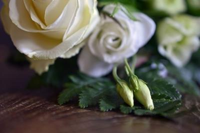 roses-4059114__480[1].jpg