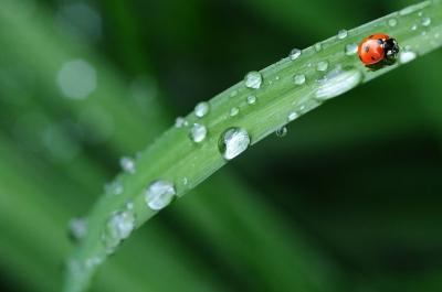 ladybug-574971__480[1].jpg