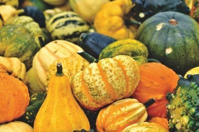 pumpkin-4459053__480[1].jpg