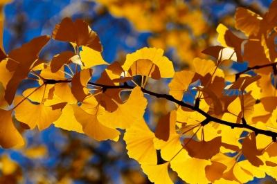 fall-3217256_1280.jpg