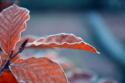 leaves-3845310__480[1].jpg