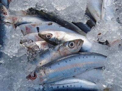 sardines-1106191__480[1].jpg