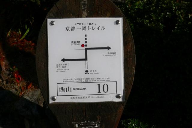 P1080532.jpg