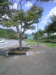080920玖珠2.JPG