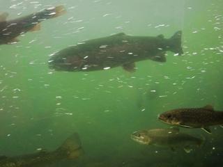 120911-22山の水族館.JPG