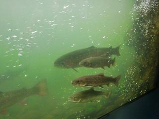 120911-24山の水族館.JPG