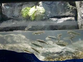 120911-27山の水族館.JPG