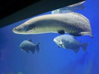 120911-28山の水族館.JPG