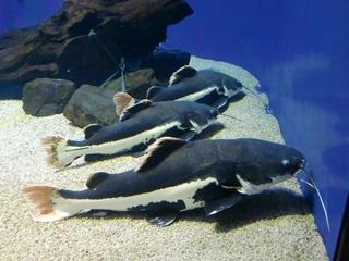 120911-30山の水族館.JPG
