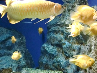 120911-31山の水族館.JPG