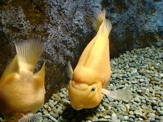 120911-32山の水族館.JPG
