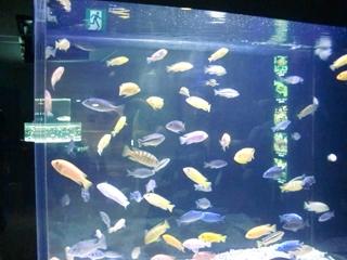 120911-34山の水族館.JPG