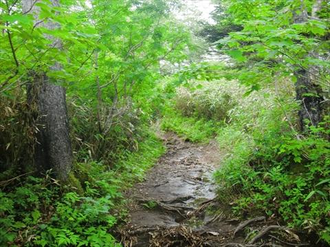 150725-02黒岳.JPG