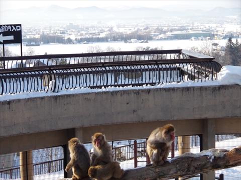 160130-28旭山動物園.JPG