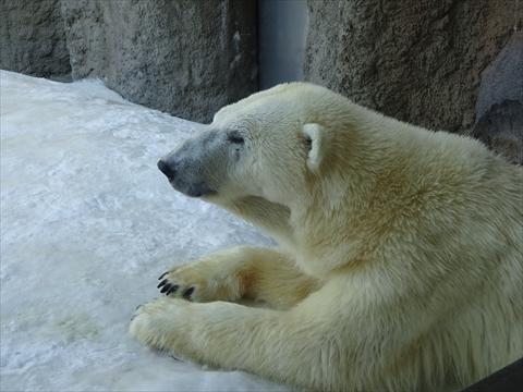 160312-14旭山動物園.jpg