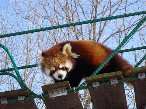 160312-17旭山動物園.jpg