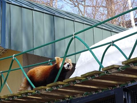 160312-18旭山動物園.jpg