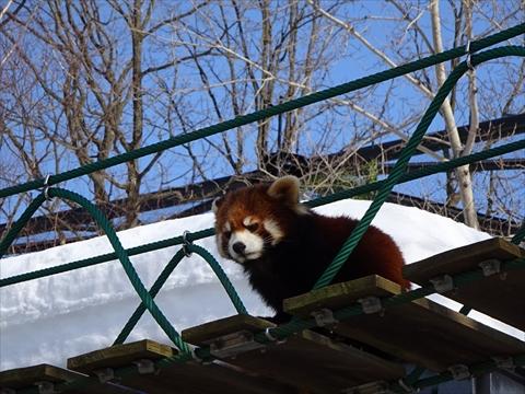 160312-19旭山動物園.jpg