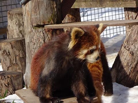 160312-20旭山動物園.jpg