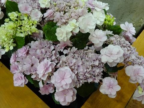 160611-15花フェスタ.jpg