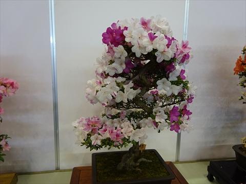 160611-20花フェスタ.jpg