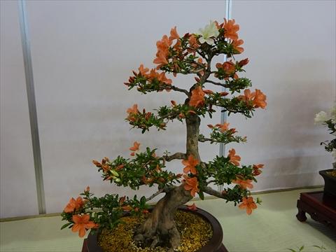 160611-22花フェスタ.jpg