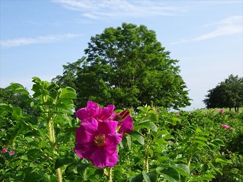 160716-66六花の森.jpg