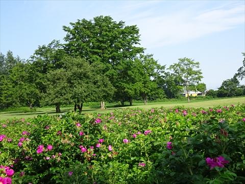 160716-68六花の森.jpg