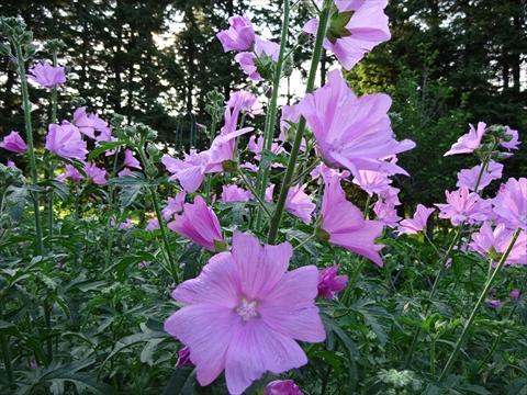 160716-77紫竹ガーデン.jpg