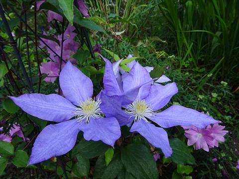 160716-78紫竹ガーデン.jpg