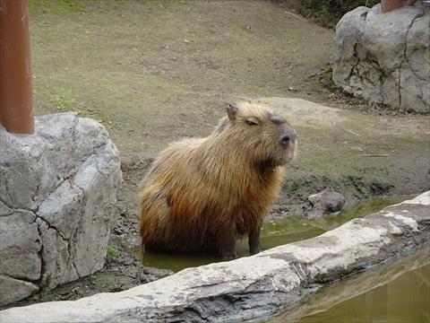 160718-10旭山動物園.jpg