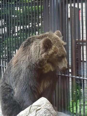 160718-17旭山動物園.jpg