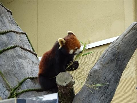 160718-18旭山動物園.jpg
