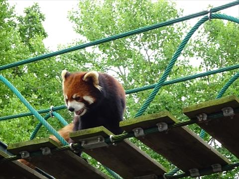 160718-20旭山動物園.jpg