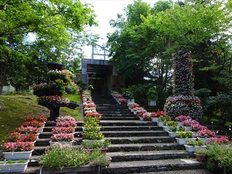 160827-01神楽岡公園.jpg