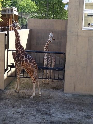 160827-15旭山動物園.jpg
