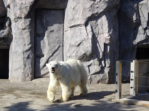 160827-19旭山動物園.jpg