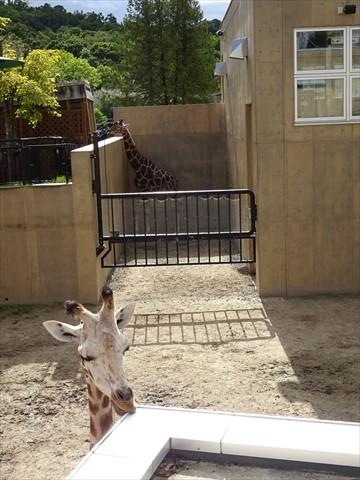160919-05旭山動物園.jpg