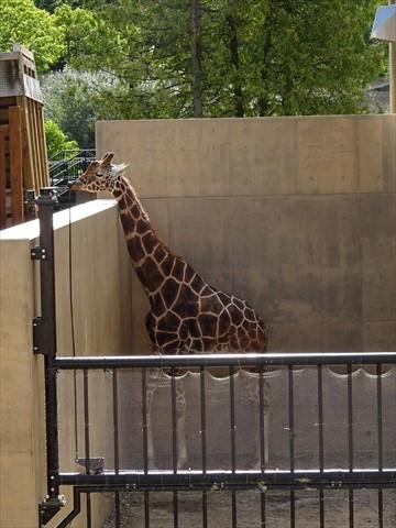160919-06旭山動物園.jpg