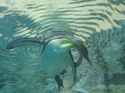 160919-10旭山動物園.jpg