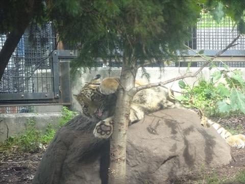 160919-13旭山動物園.jpg