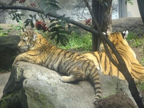 160919-15旭山動物園.jpg