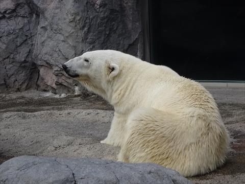 160919-19旭山動物園.jpg