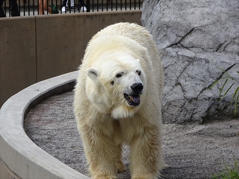 160919-20旭山動物園.jpg