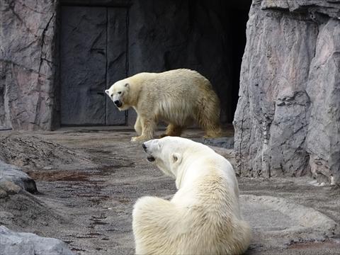 160919-21旭山動物園.jpg
