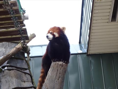 161126-17旭山動物園.jpg
