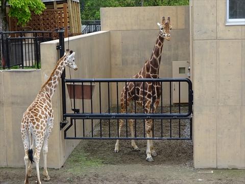 170611-21旭山動物園.jpg