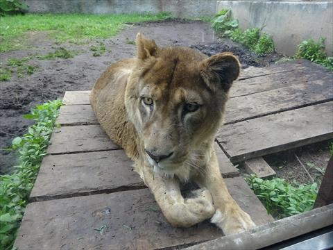 170611-25旭山動物園.jpg