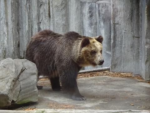 170611-27旭山動物園.jpg