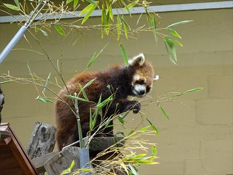 170611-29旭山動物園.jpg